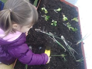 plantar-hort-criança-respectuosa